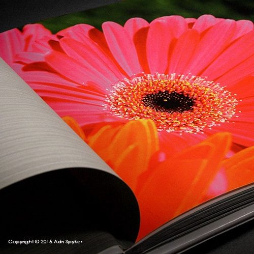An open book lies open with the first page draped to the left and on the right is a tightly cropped close up of a bright pink Gerber daisy flower.