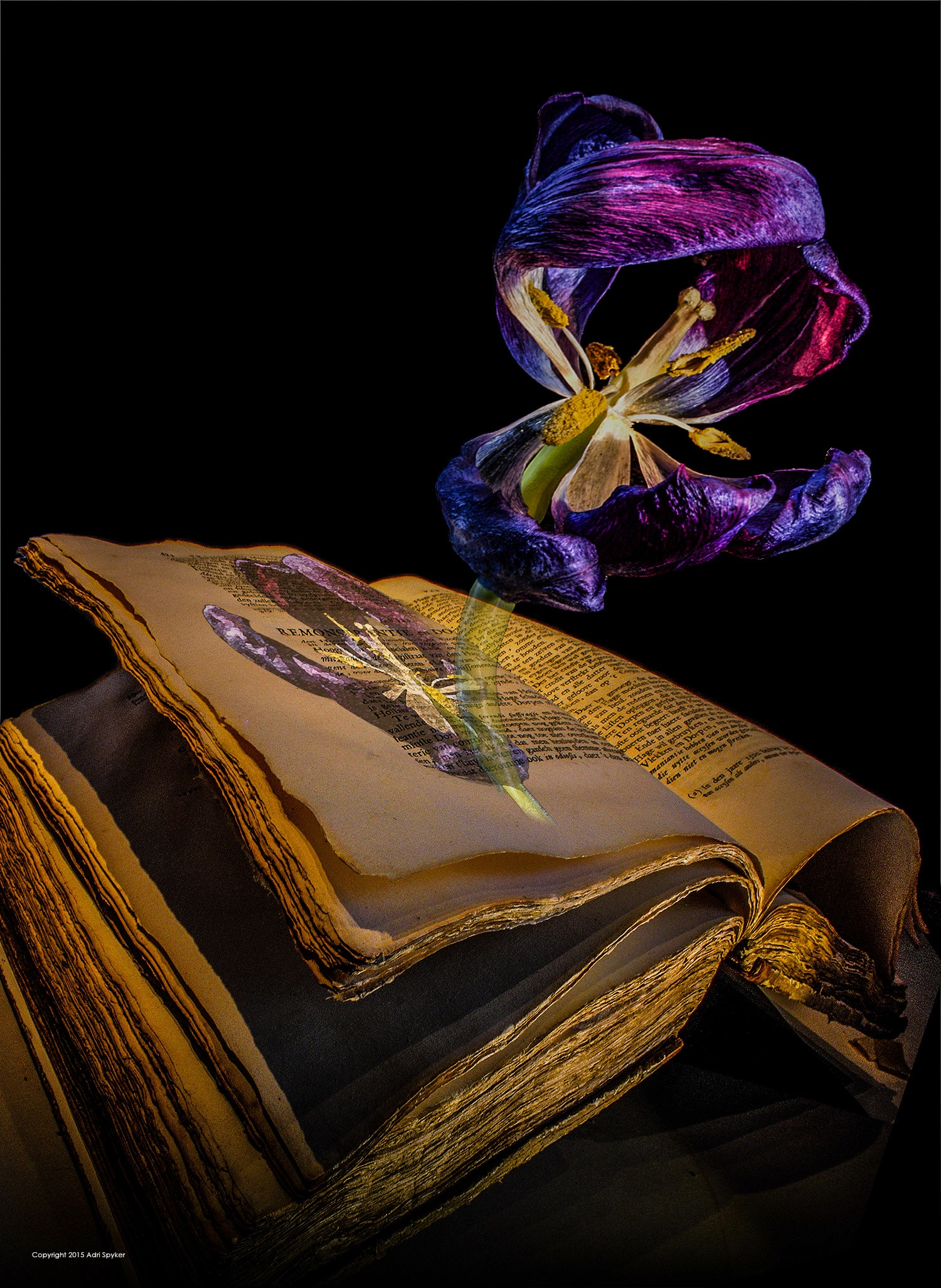 Photograph of an old book with a purple tulip on the page and another three dimensional tulip rising from the page.