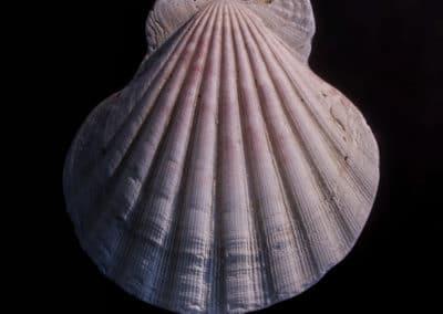 shell-web